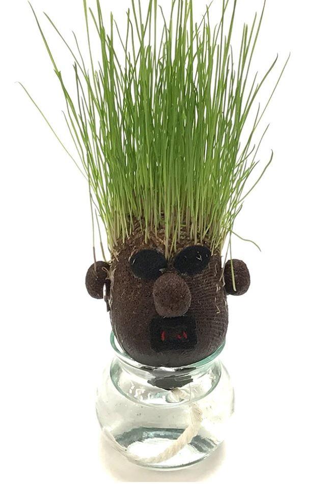 栽培キット Hair LABO ヘアラボボーイズ