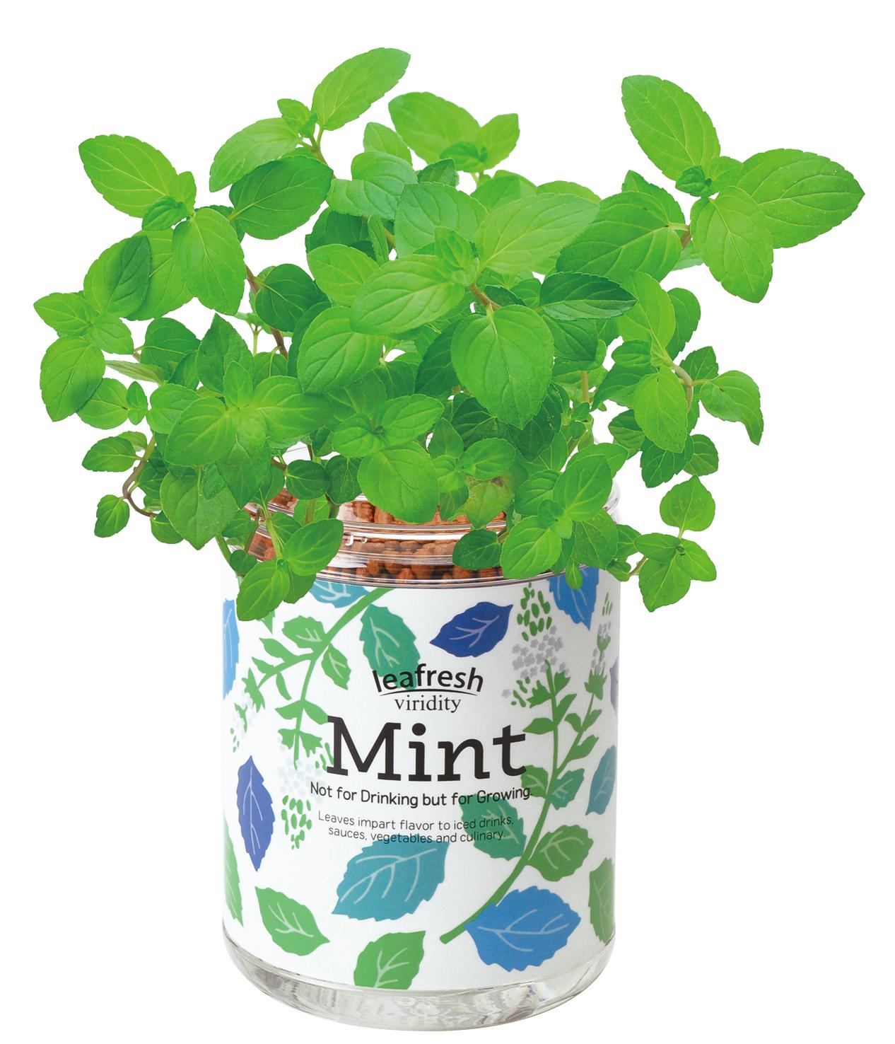 栽培キット 育てるグリーンペット ミント