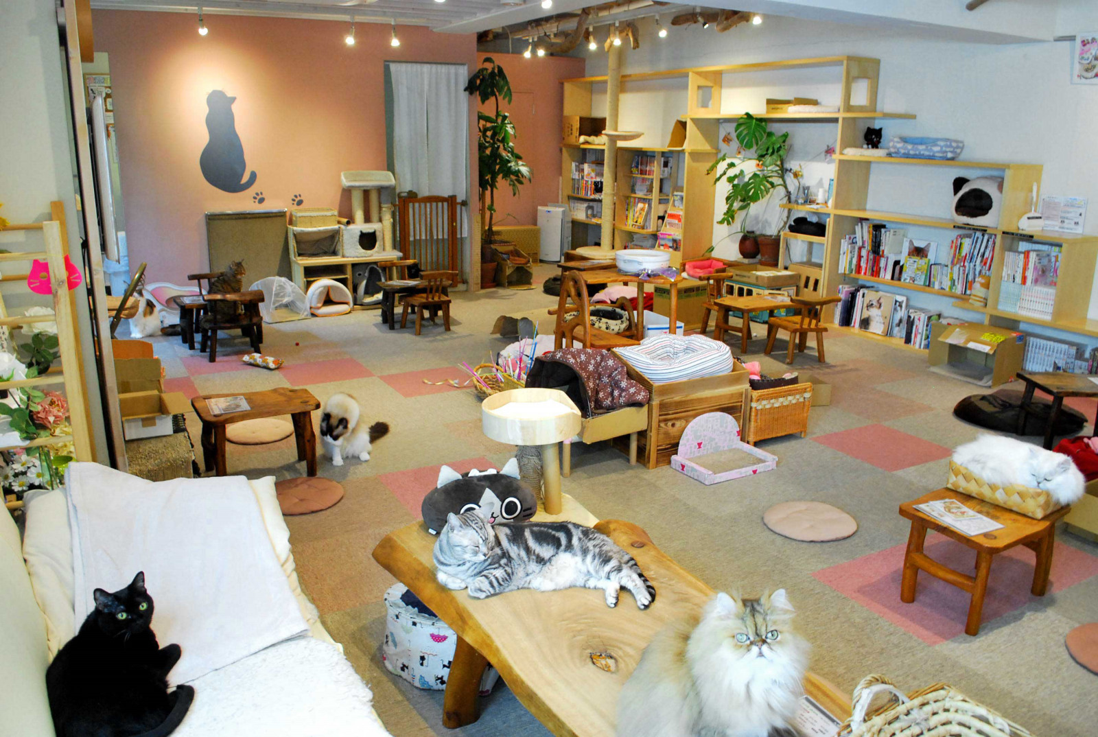 Cat Cafe Cateriam