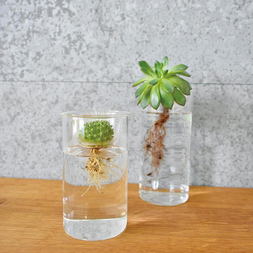 BULB VASE 水栽培ガラスベース クリア ショート