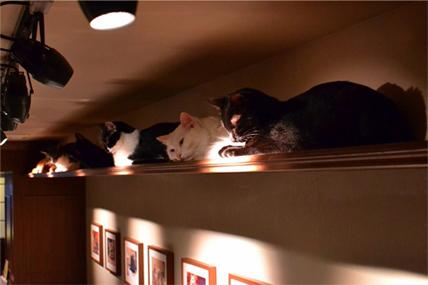 猫カフェ「きゃらふ」